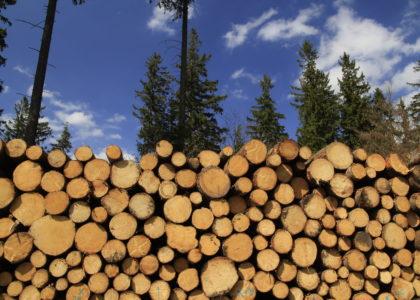 Logius przemysł drzewny